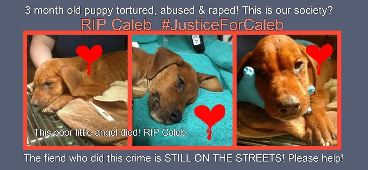 Justice For Caleb - Tweet Sheet