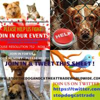 Support H.Res 752 -#BanDCMT #StopDogCatMeatTrade Tweet Sheet