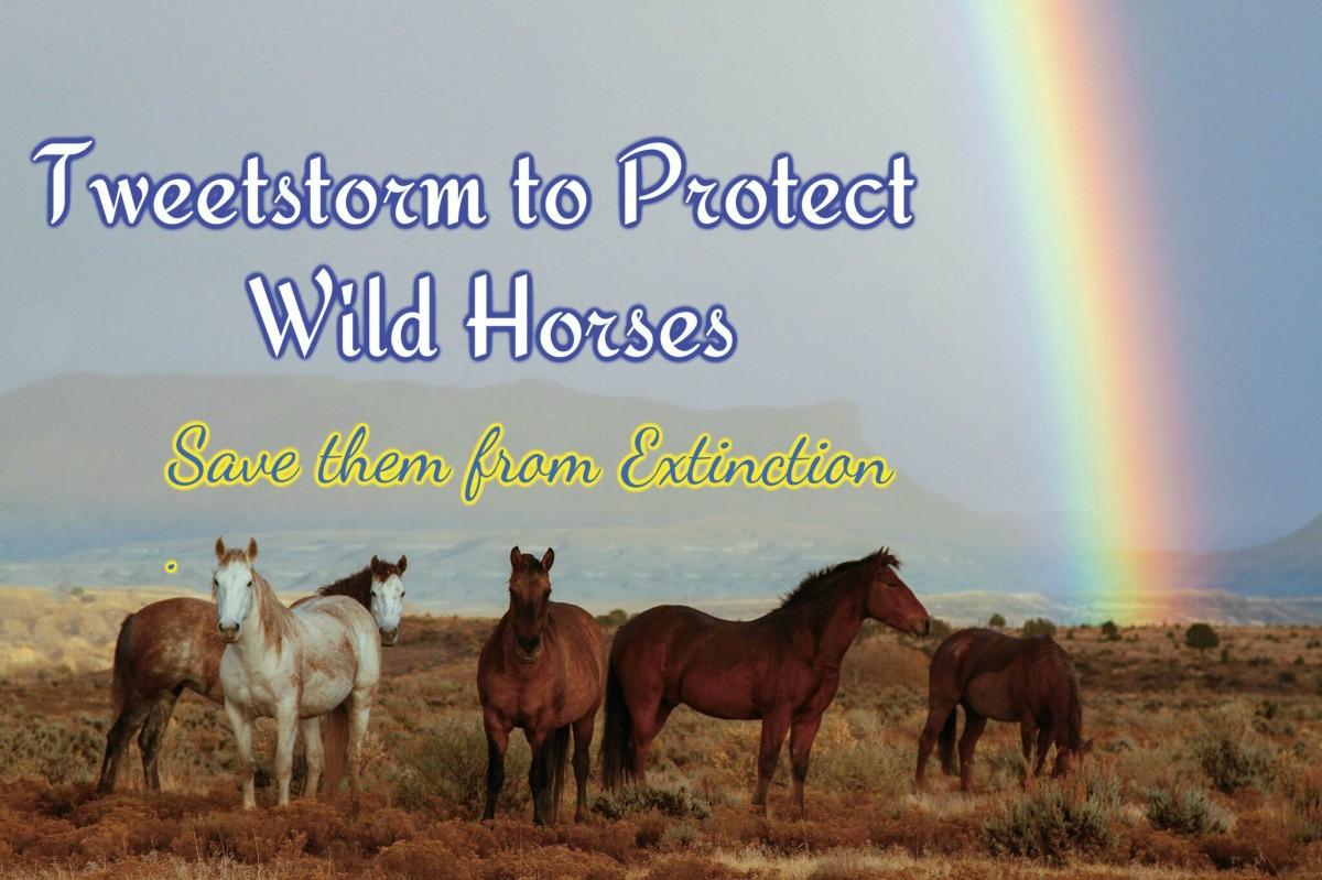 Protect Wild Horses Tweet Sheet - Please share and tweet