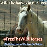 #ReWild The Horses in BLM prisons! #FreeTheWildHorses